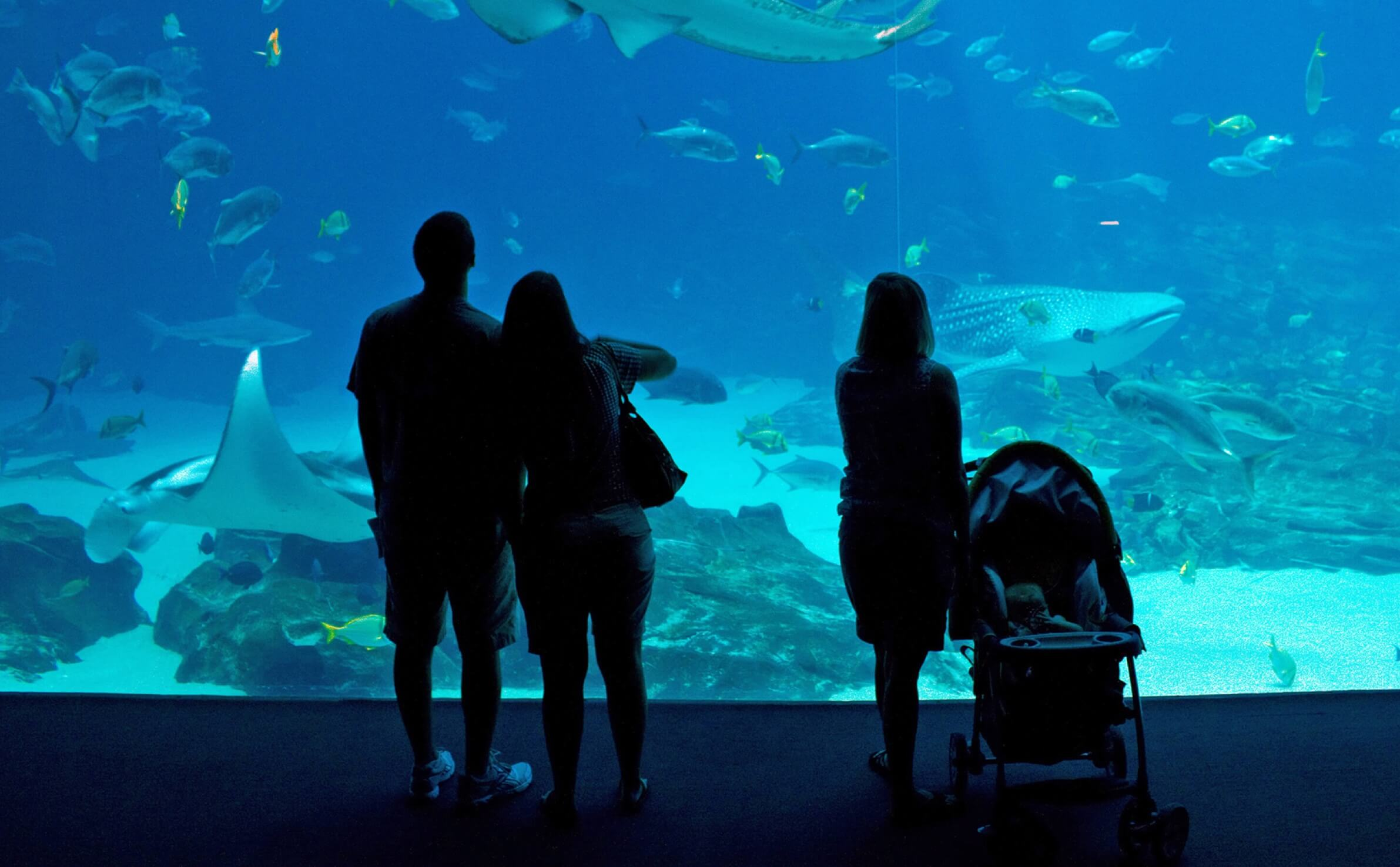 Visitors stand in front of fish tank at Georgia Aquarium