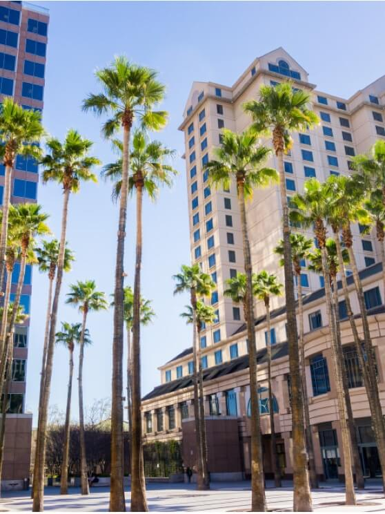 Palm tree city center in San Jose